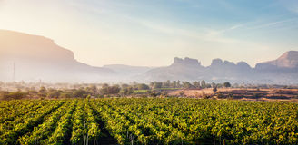 Vineyard at sunrise. In the village and mountains at background in Nasik, Maharashtra, India stock photos