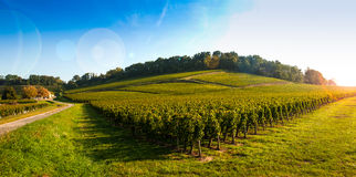 Vineyard Sunrise-Vineyards of Saint Emilion Stock Images