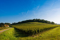 Vineyard Sunrise-Vineyards of Saint Emilion Royalty Free Stock Images