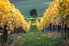 Vineyard sunset. In autumn, Burgenland, Austria Stock Photo