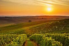 Vineyard at sunset Stock Images