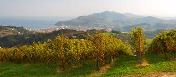 Vineyard at sunset.in Zarautz Royalty Free Stock Photo