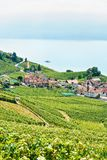 Vineyard Terrace hiking route Swiss Lavaux. Lavaux, Switzerland - August 30, 2016: Lavaux Vineyard Terrace hiking route, Lake Geneva and Swiss mountains, Lavaux royalty free stock image