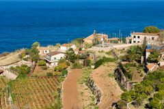 Vineyard terraces in Banyalbufar, Majorca Royalty Free Stock Images