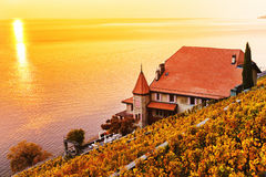 Vineyard terraces at Lake Geneva in autumn, Lavaux. Vaud, Switzerland Stock Images