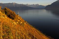 Vineyard terraces at Lake Leman Royalty Free Stock Images