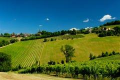 Vineyard texture Stock Images