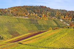 Vineyard - The Autumn Season Stock Photography
