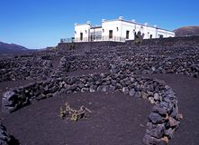 Vineyard, Timanfaya National Park, Lanzarote. Royalty Free Stock Image