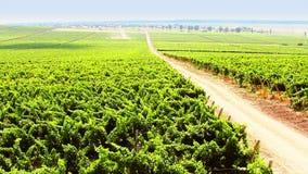 Vineyard timelapse stock footage