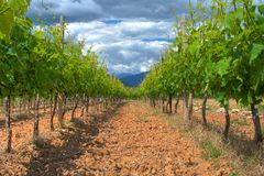 Vineyard to the sky Royalty Free Stock Image