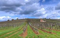 Vineyard in Tokaj Stock Images