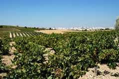 Vineyard and town, Montilla. General view of town with vineyards in the foreground, Montilla, Cordoba Province, Andalusia, Spain, Western Europe Royalty Free Stock Photography