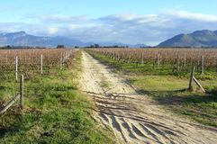 Vineyard tracks Royalty Free Stock Images