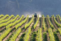 Vineyard Tractor, Okanagan, BC. Royalty Free Stock Photography