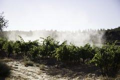 Vineyard tractor sprayer, c. Sprayer tractor vineyards, pollution ecosystem, fruit royalty free stock image