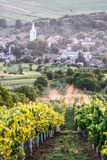 Vineyard in Transylvania. A view form the vineyard overlooking Batos village in Transylvania royalty free stock image