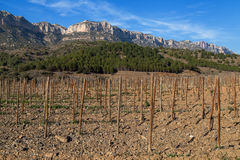 Vineyard Trellis in the Priorat Royalty Free Stock Images