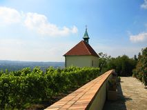 Vineyard in Troy (Troja) in Prague Stock Photo