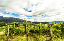 A vineyard in the Tuscan countryside. A prestigious vineyard in the countryside of Chianti (Tuscany, Italy), where the product is an excellent and famous Royalty Free Stock Photo