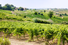 Vineyard in Tuscany Royalty Free Stock Photo