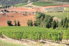 Vineyard in Tuscany hill Royalty Free Stock Photo