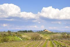 Vineyard in Tuscany, Italy Stock Photo