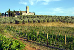 Vineyard in Tuscany, Italy Royalty Free Stock Images