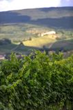 Vineyard in Tuscany, Italy. This is a beautiful view of a vineyard in Tuscany, Chianti, Italy. The foreground is filled with a plantation of grape-bearing vines stock photo