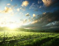 Vineyard in Tuscany, Italy Stock Photography