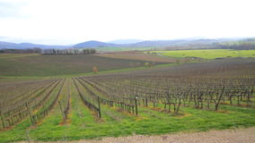 Vineyard in Tuscany, Italy. Video of Vineyard in Tuscany in Italy stock footage