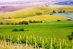 Vineyard in Tuscany landscape, Italy Stock Photos