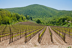 Vineyard in Tuscany Stock Photos