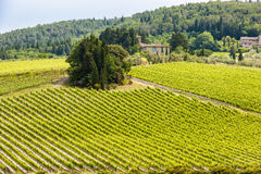 Vineyard Tuscany Royalty Free Stock Photo