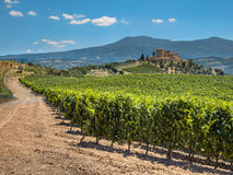 Vineyard at a Tuscany Winery Estate, Italy Stock Images