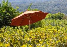 Vineyard umbrella Stock Photos