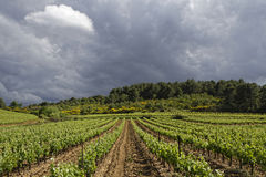 Vineyard under the storm Stock Images