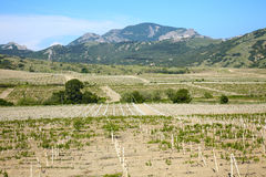Vineyard in a valley Stock Images