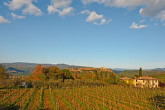 Vineyard Valley Royalty Free Stock Photography