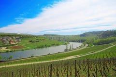 Vineyard , Valley in Germany , Europe. Vineyard , summer farm , Valley in Germany , Europe Royalty Free Stock Photography