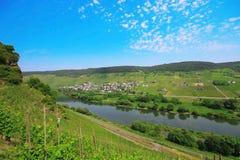 Vineyard , Valley in Germany , Europe. Vineyard , summer farm , Valley in Germany , Europe Stock Image