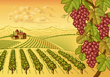 Vineyard valley landscape Royalty Free Stock Image