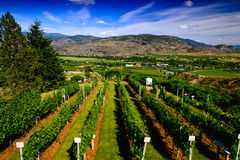 Vineyard in the valley Stock Photos
