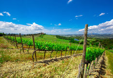 Vineyard in the  Valley San Quirico d Orcia in Tuscany, Italy Royalty Free Stock Image