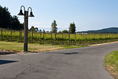 Vineyard in Vancouver Island Stock Photography