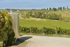 Vineyard and vat for wine-making Stock Images