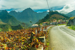 Vineyard. ver. Autumn. Madeira typical vineyards under the mountains royalty free stock photography