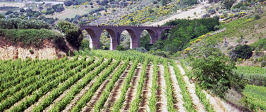 Vineyard and viaduct. High angle view of vineyard with viaduct in background royalty free stock photo