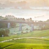 Vineyard viaduct Stock Photography