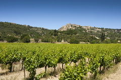 Vineyard with view of Gordes. Vineyard and hilltop village of Gordes in the Luberon, Vaucluse, Provence Royalty Free Stock Images